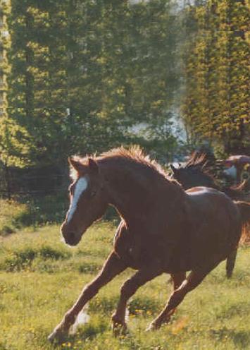 LC-Ranch - Pferde - Al...