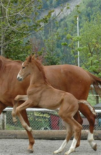 LC-Ranch - Pferde - Wa...